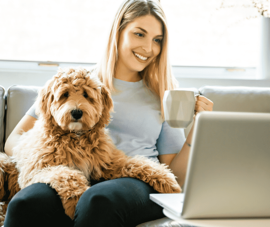 Labradoodle trimmen online training