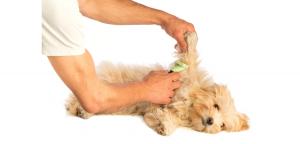 Puppygewenning
